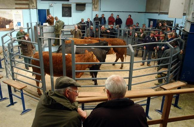 STOCK Farmers inspecting the cattle at the annual limousin sale at the Ulverston Auction Mart in April 2003.