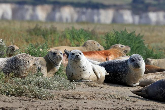 Harbour and grey seals