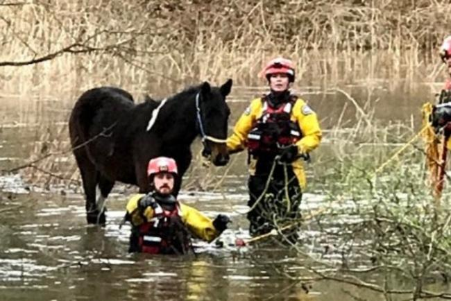 A pony is rescued from floodwater in a field beside the River Wey in Guildford