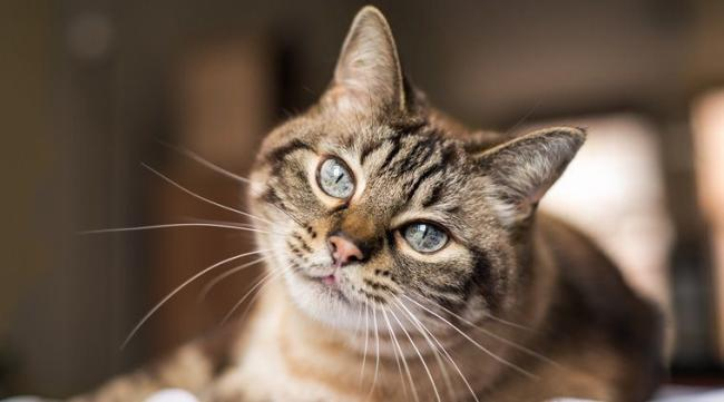 The Hospice of the Good Shepherd is to host a Virtual Cat Show next week.