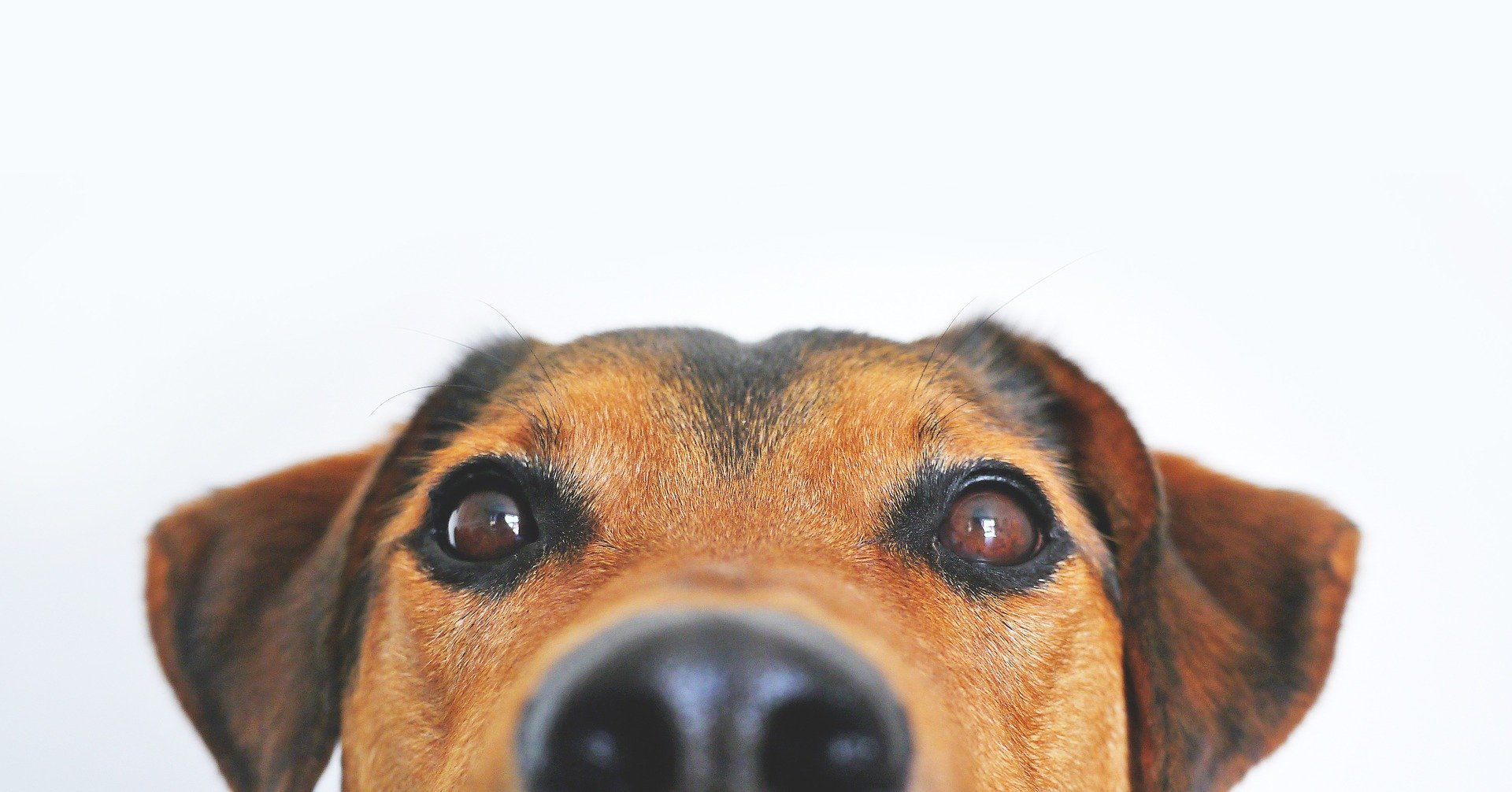 PDSA Vet: How to prevent your pet from swallowing strange things