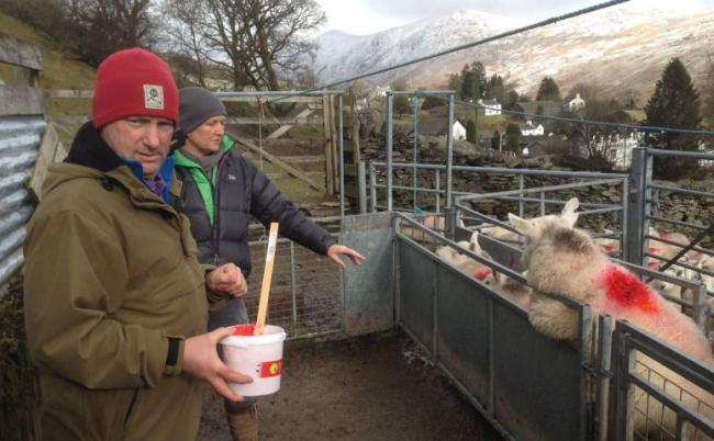Troutbeck farmer Pip Simpson who has recovered 14 stolen pregnant ewes
