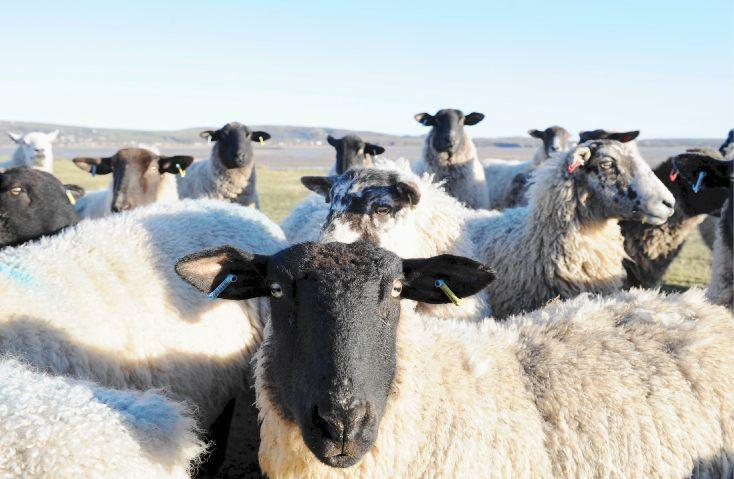 Kendal Wool Gathering celebrates town's trade connections