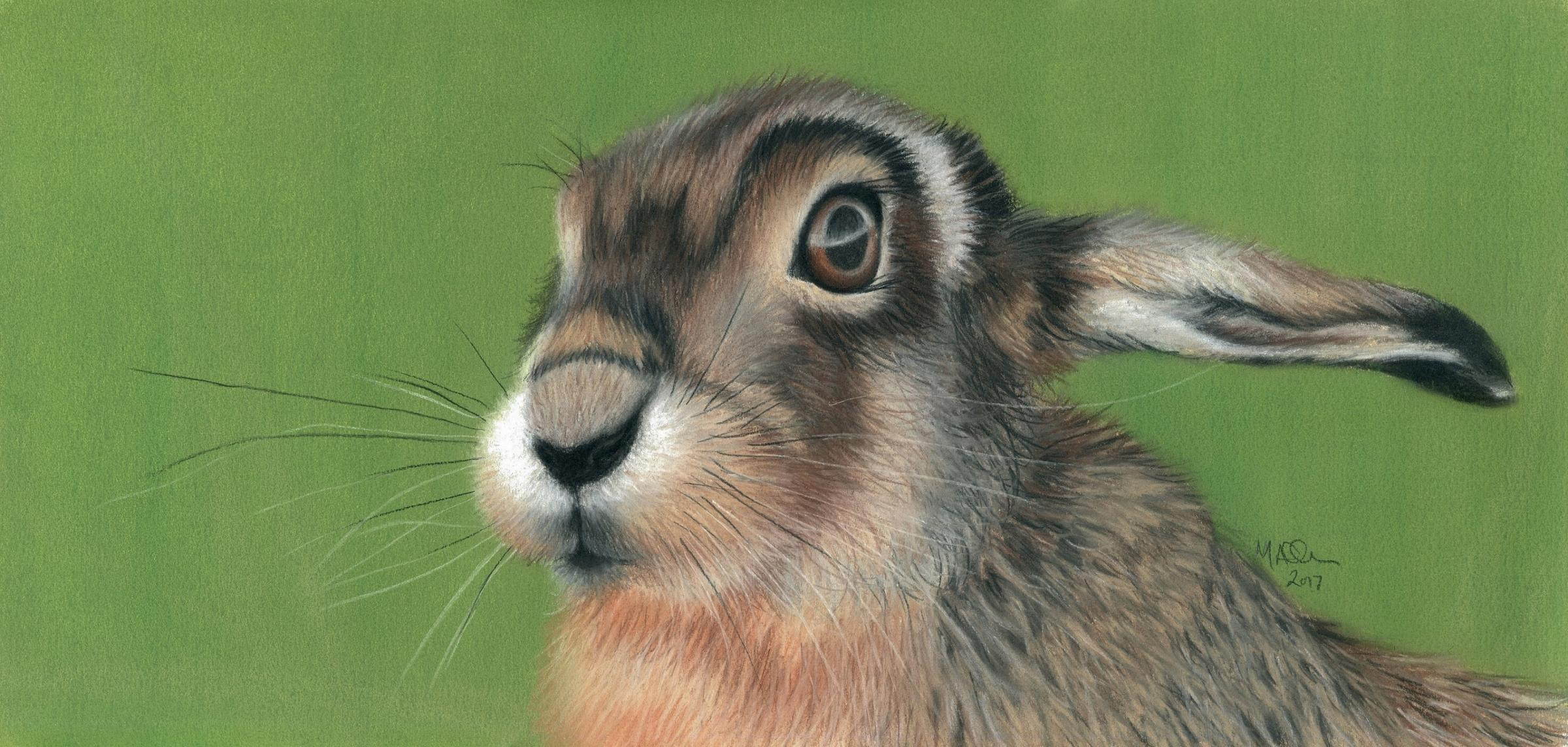 HOP: Hare in the long grass by Mandy Allan