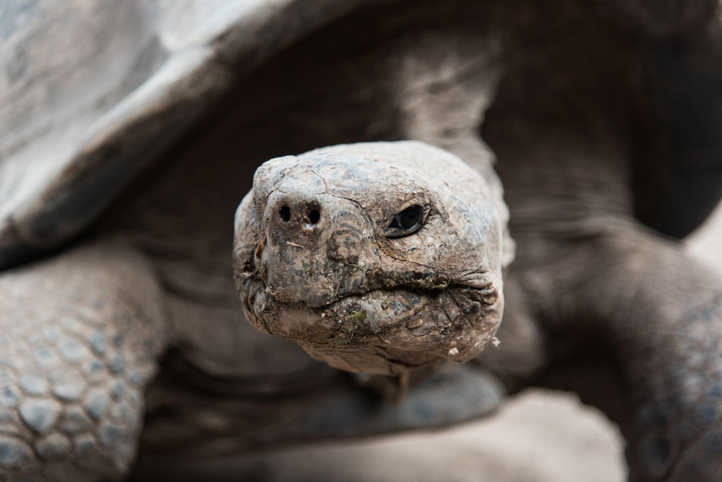 TRAVEL  Can humans and animals live happily ever after in Galapagos ... 72bc1f9fb458f
