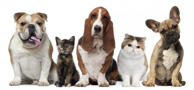 PAWS FOR THOUGHT: It's important to care for your pet's welfare