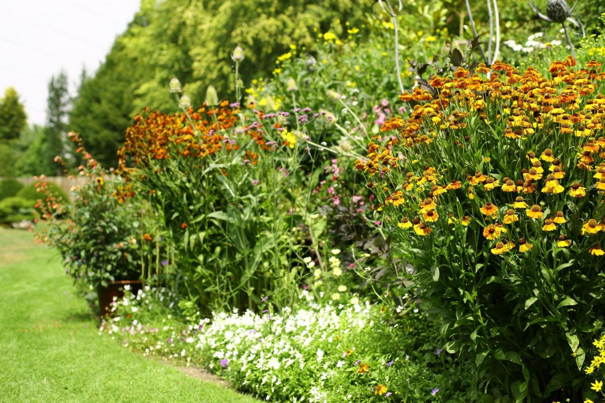 Image result for Gardening: TV presenter Carol Klein spills the secrets of top British gardens - so you can copy their success